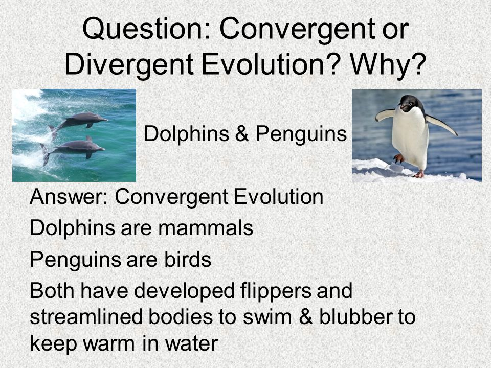 convergence or divergence in philosophy Convergence may refer to: contents 1 science, technology, and mathematics  11 biology and  see also[edit] converge (disambiguation) convergent ( disambiguation) divergence (disambiguation) transmedia storytelling.
