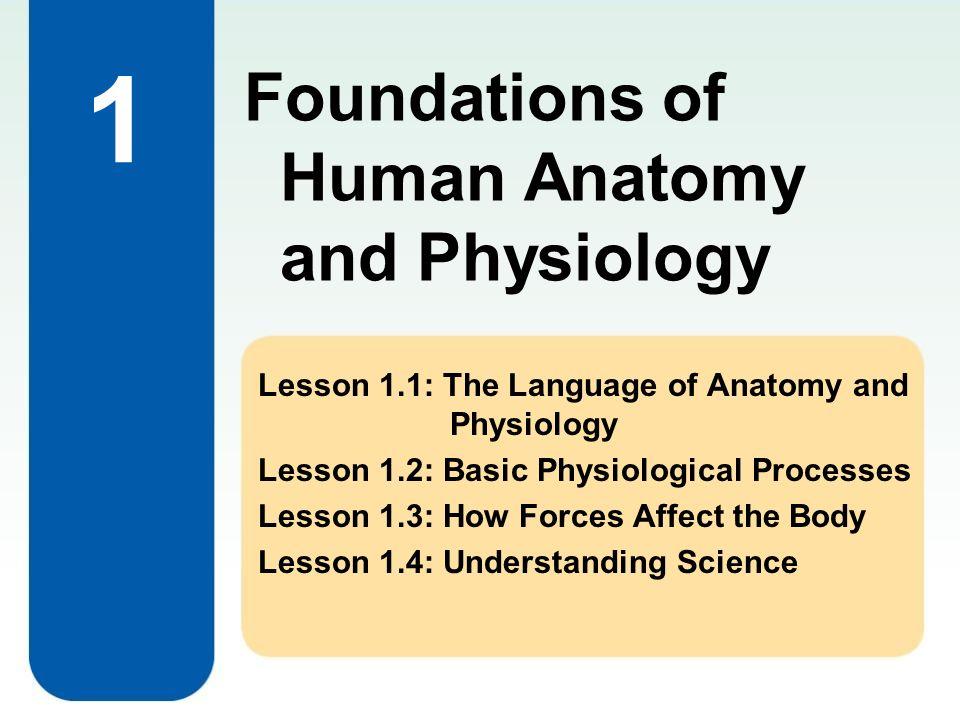 Atemberaubend Anatomy And Physiology Lessons Fotos - Anatomie und ...