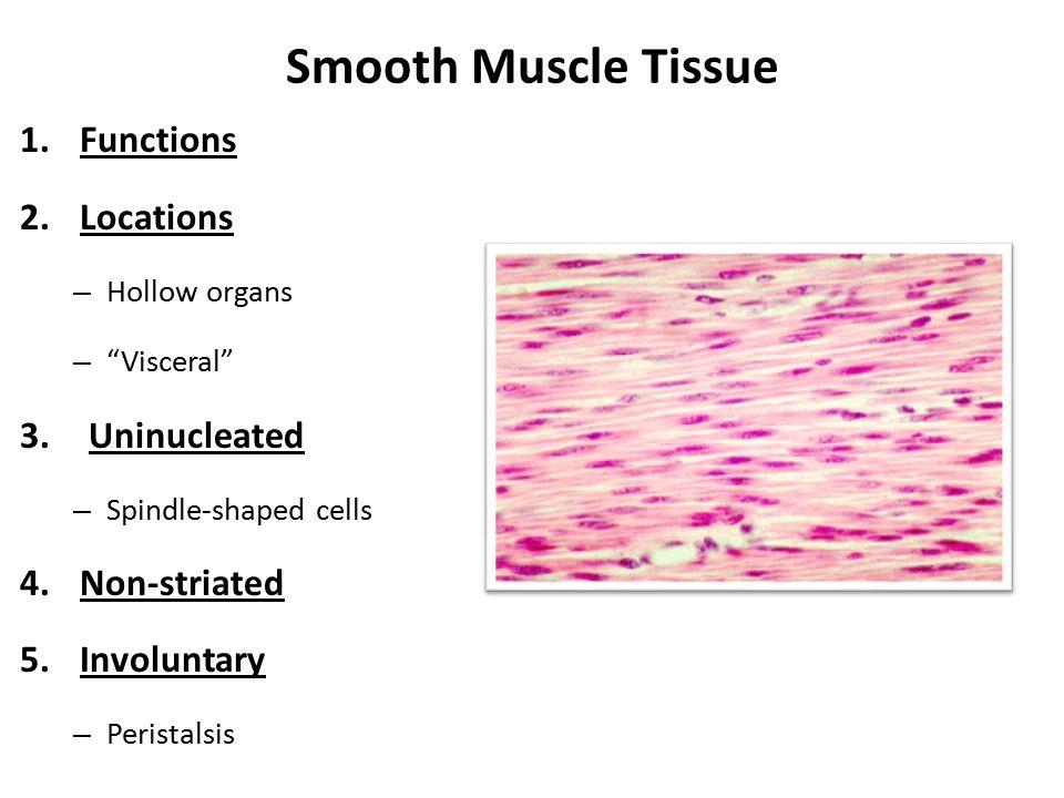 Muscle Tissue Function Essay Academic Writing Service Jchomeworkbuzu