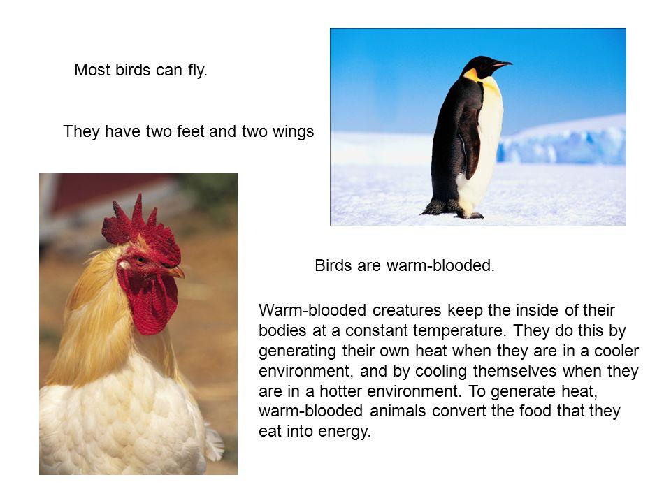 Science Vertebrates Animals with backbones. Science ...