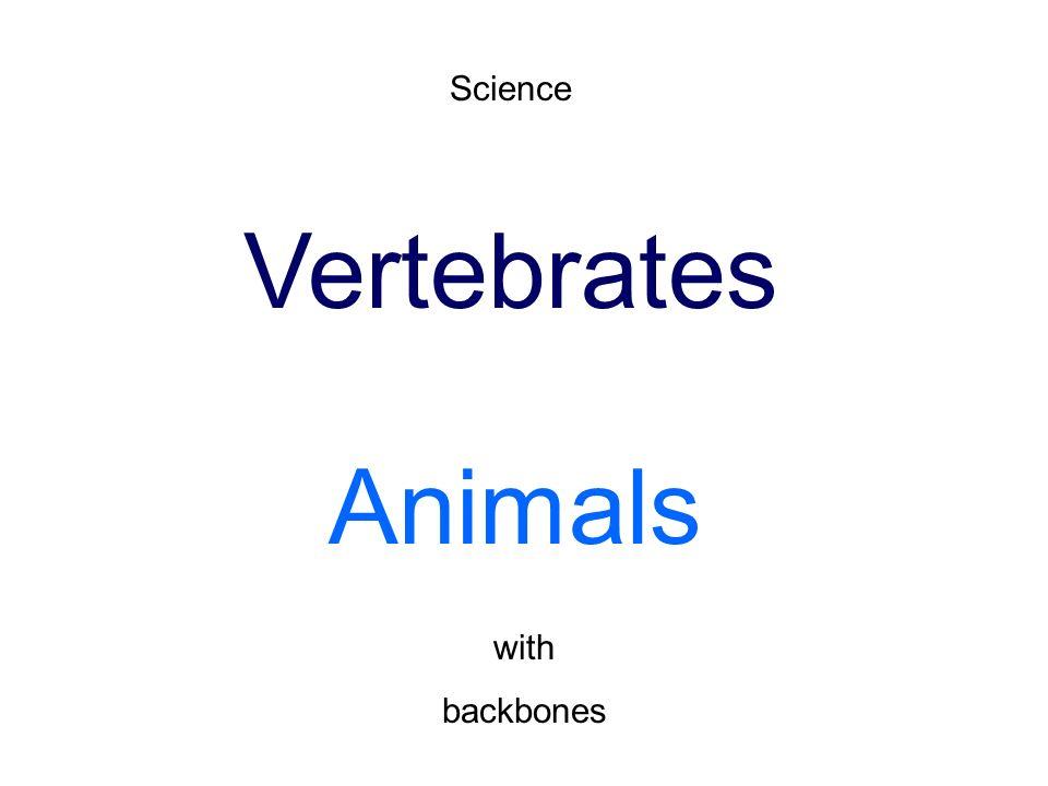 Science Vertebrates An...
