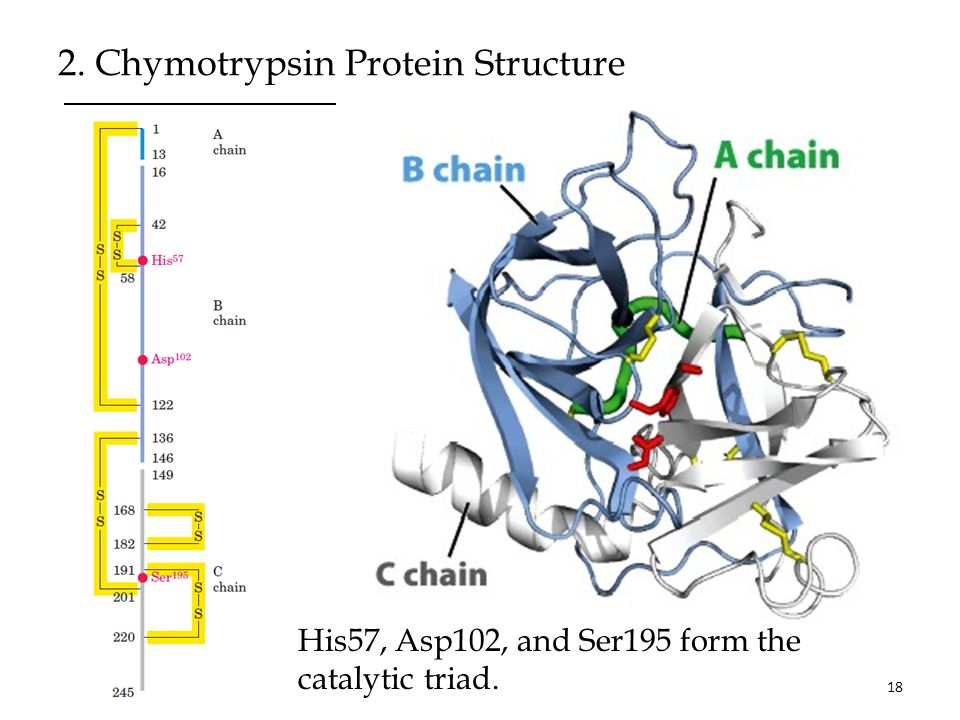 mechanism of action of chymotrypsin pdf