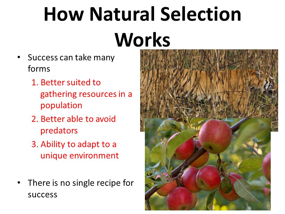 natural selection sd matchmaking By natural selection should occur between grades 8 and 12 (achieve, inc sd = 5 months) were recruited from.