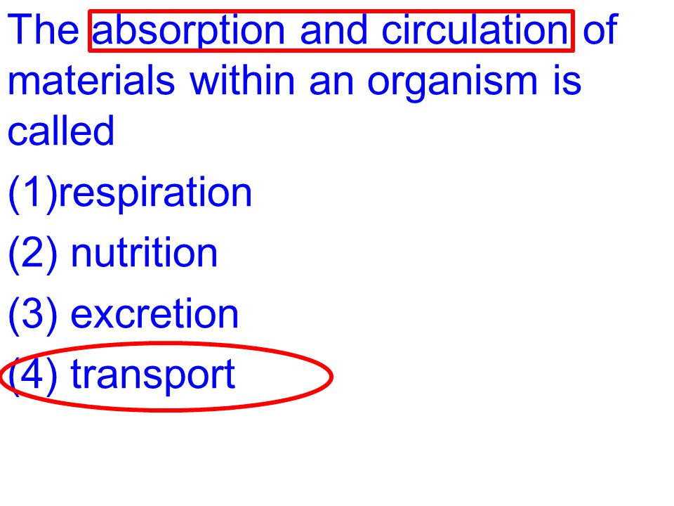 What Is An Organism That Makes Its Own Food Called
