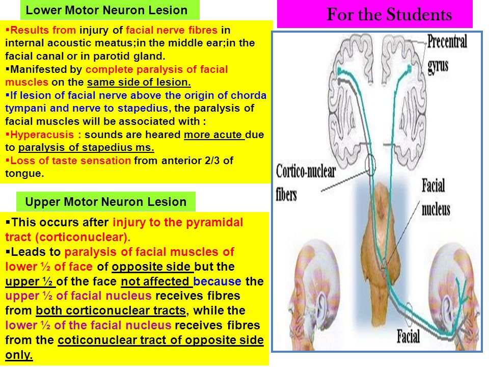 Nerve supply of face 5th 7th cranial nerves ppt video for Lower motor neuron diseases
