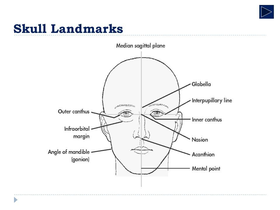 Skull radiographic anatomy