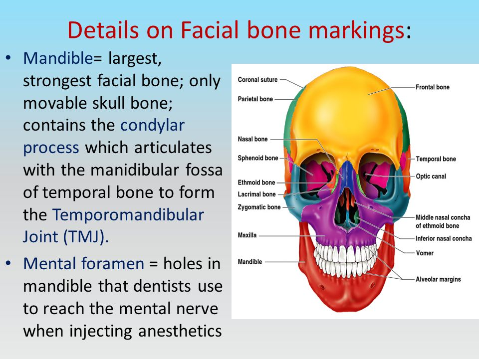 Maxilla bone markings