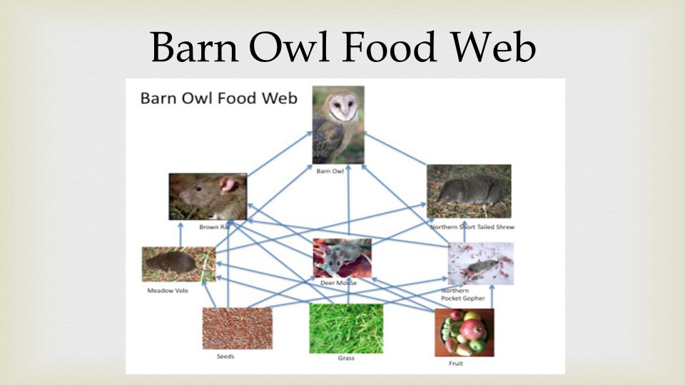 By rachel lee period 6 code 9 ppt video online download for Food bar owl