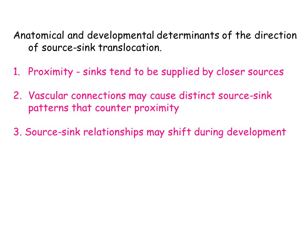 source and sink relationship in plants ppt template