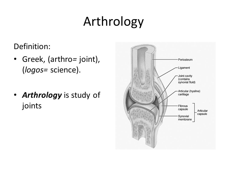 arthrology. - ppt video online download, Human Body