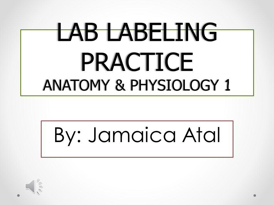 Anatomy labeling practice