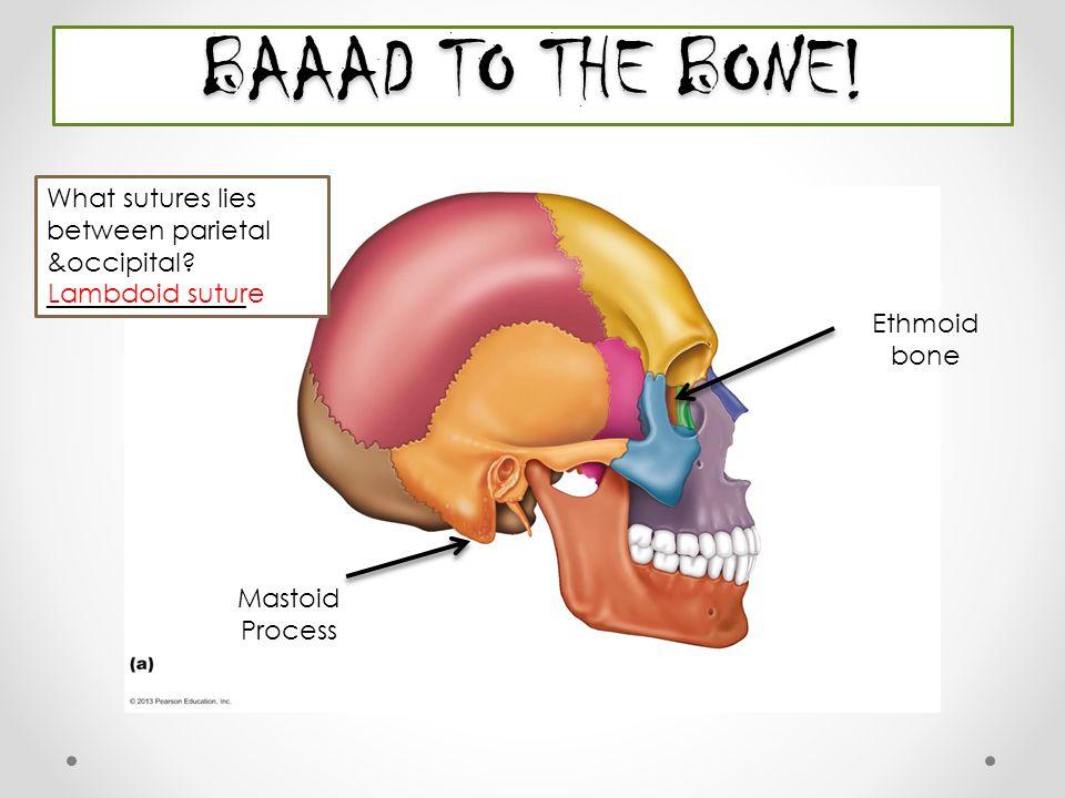 Beautiful Anatomy Bone Labeling Practice Festooning - Anatomy And ...