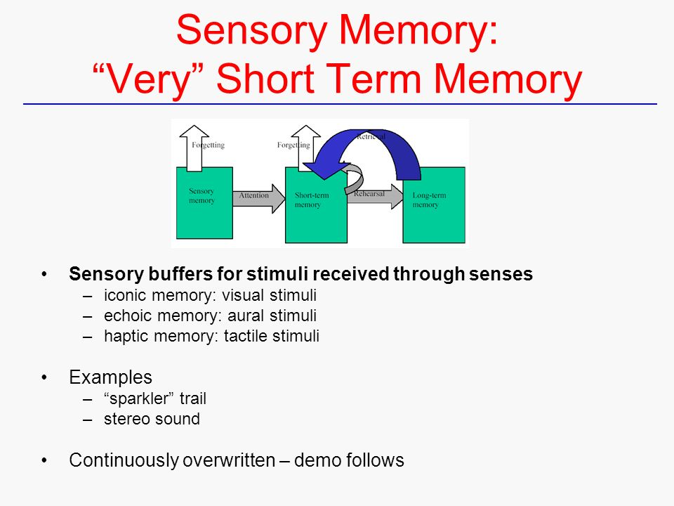 Short Term And Long Term Memory : The human processing and memory ppt download