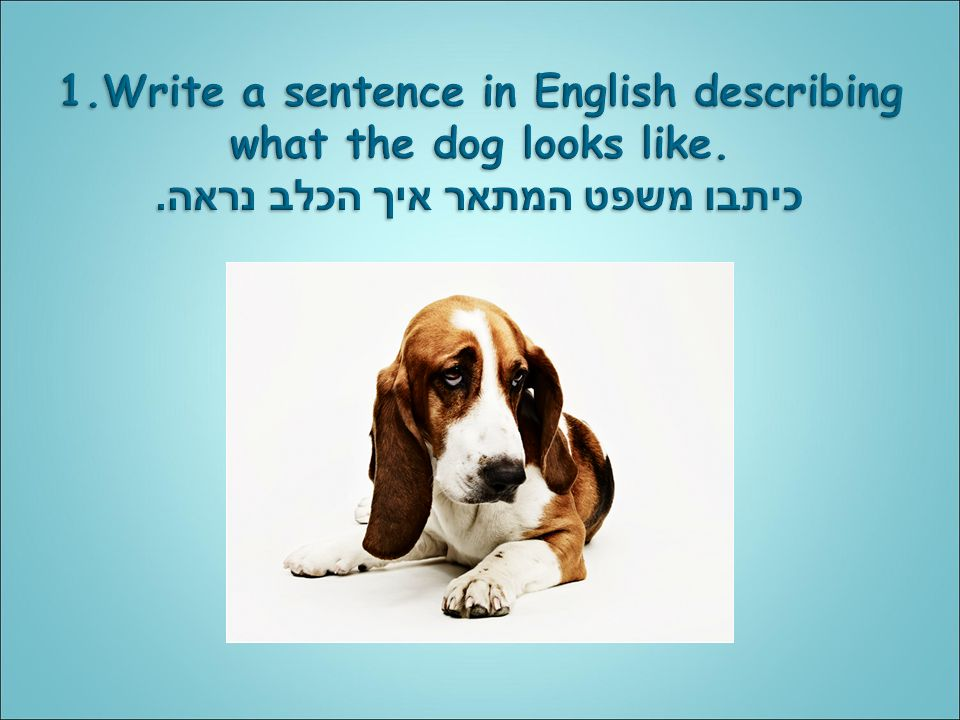 how to write a sentence in english