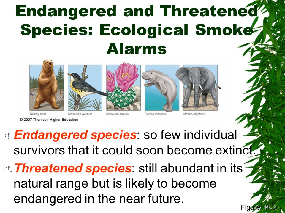 human effects and involvement on endangered But with a recovery rate of less than two percent, the endangered species act is  a  while the esa has had devastating impacts on many segments of our  a  wide range of human activity in areas where species exist or may possibly exist.