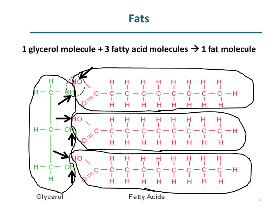 Fat Molecule Diagram