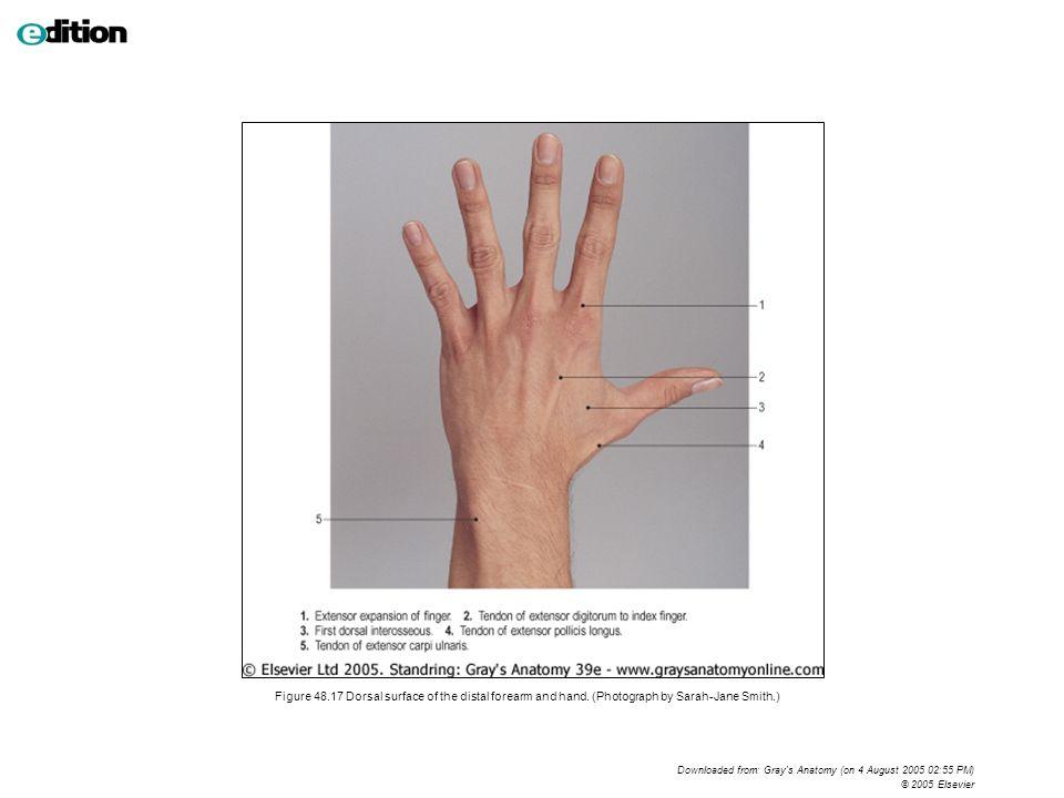 Luxury Dorsal Hand Component - Anatomy Ideas - yunoki.info