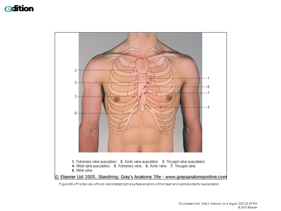 Amazing Lung Fissure Surface Anatomy Picture Collection Human