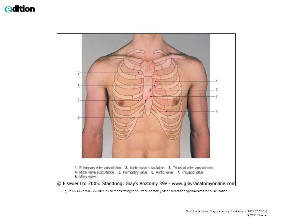 Encantador Lungs Surface Anatomy Motivo Anatoma De Las