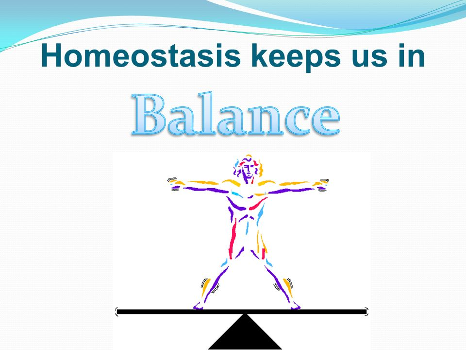 What Is Homeostasis If Your Body Is In Homeostasis
