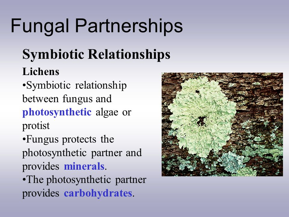 lichen and moss symbiotic relationship definition
