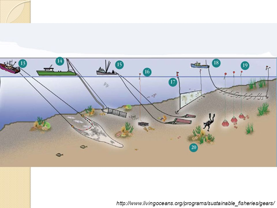 Fishing gear overview ppt video online download for Sustainable fishing definition