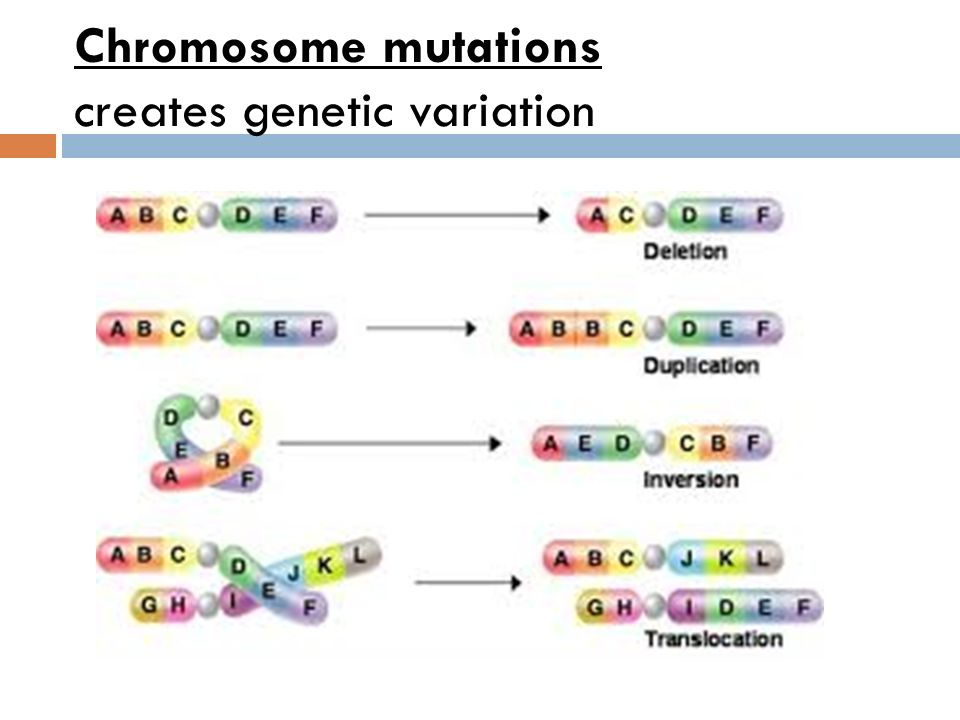 Aca Molecular Genetics and Biotechnology ppt video online download – Chromosomal Mutations Worksheet