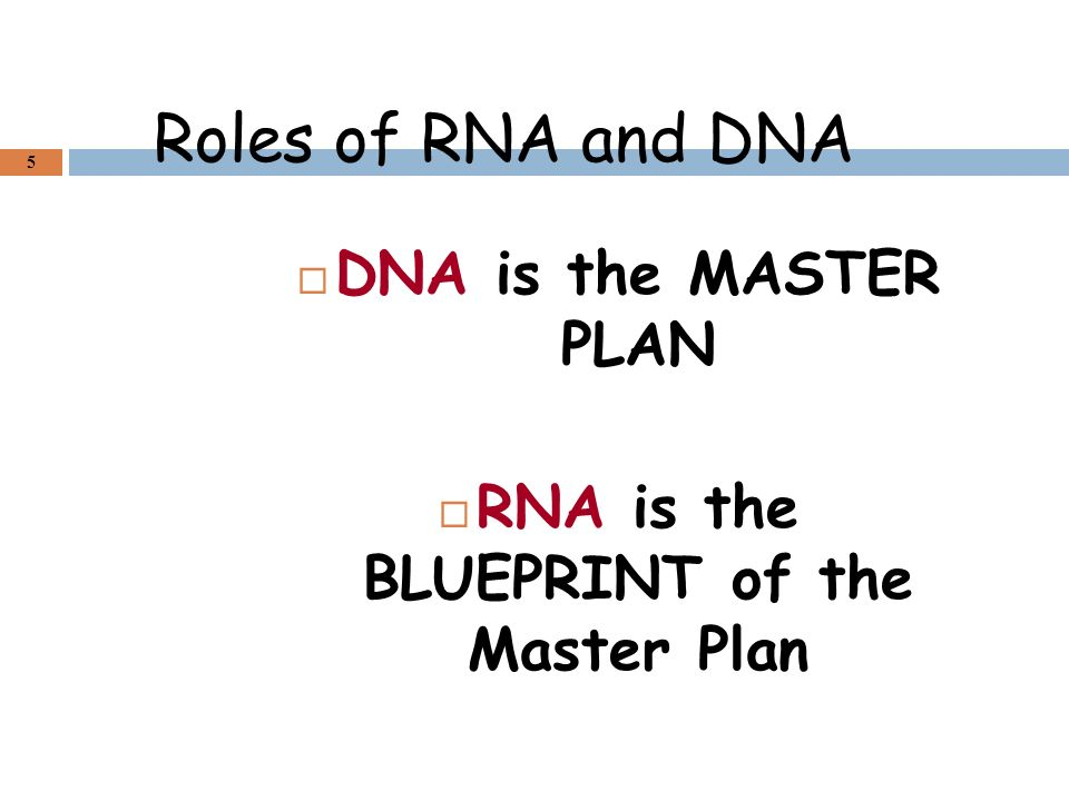 Aca molecular genetics and biotechnology ppt video online download rna is the blueprint of the master plan malvernweather Images