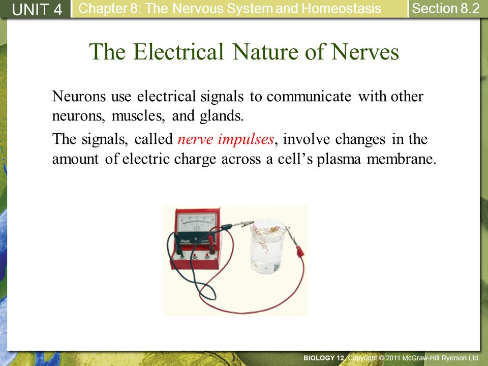 The Electrical Nature of Nerves