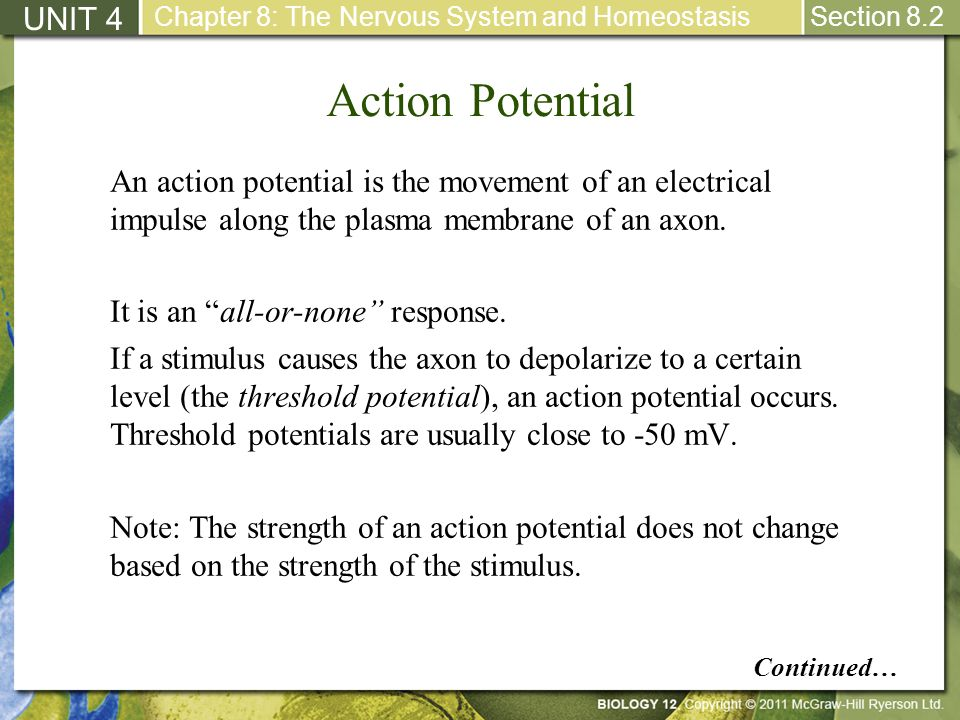UNIT 4 Chapter 8: The Nervous System and Homeostasis. Section 8.2. Action Potential.