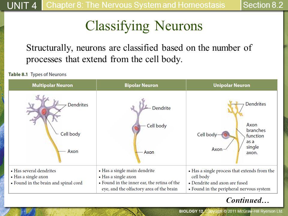 Classifying Neurons UNIT 4