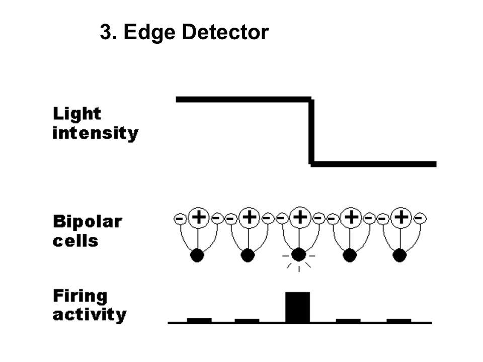 visual computation i  physiological foundations