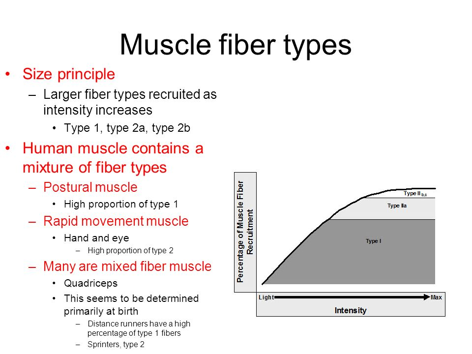 exercise biochemistry - ppt video online download, Muscles