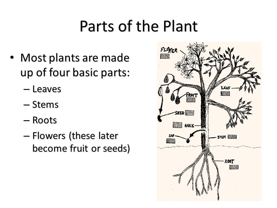 Plant anatomy unit 1 chapter 6 lesson ppt video online for Four main components of soil
