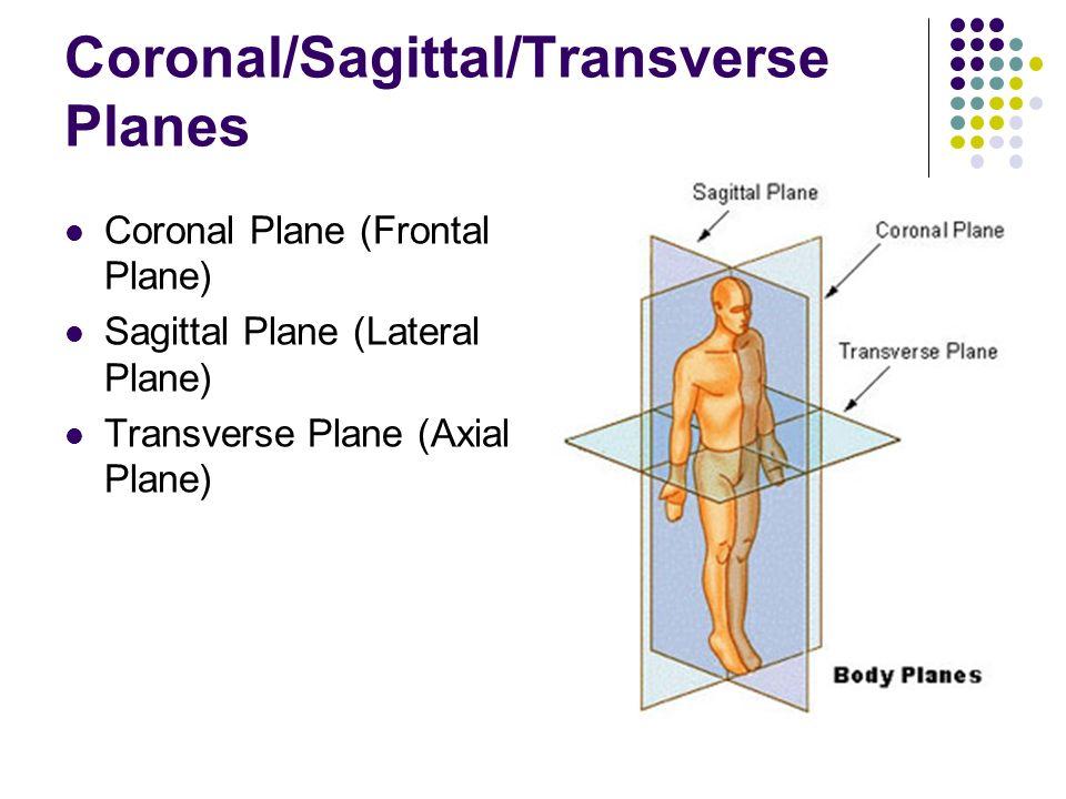 Anatomy transverse plane
