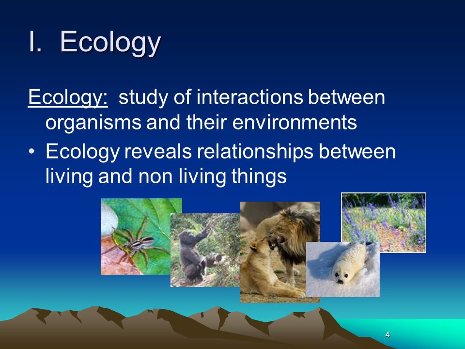 relationship between organisms and environment