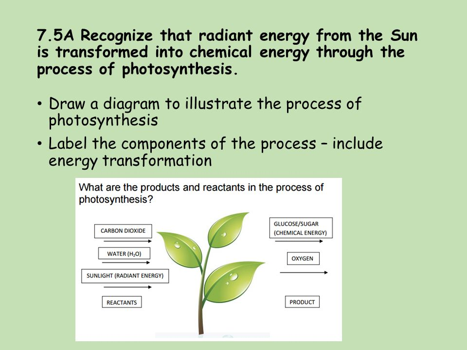 what are the three components of photosythesis Photosynthesis: the process by  glucose, the primary energy source in cells, is made from two three-carbon ga3p molecules photosynthesis and the leaf in plants.