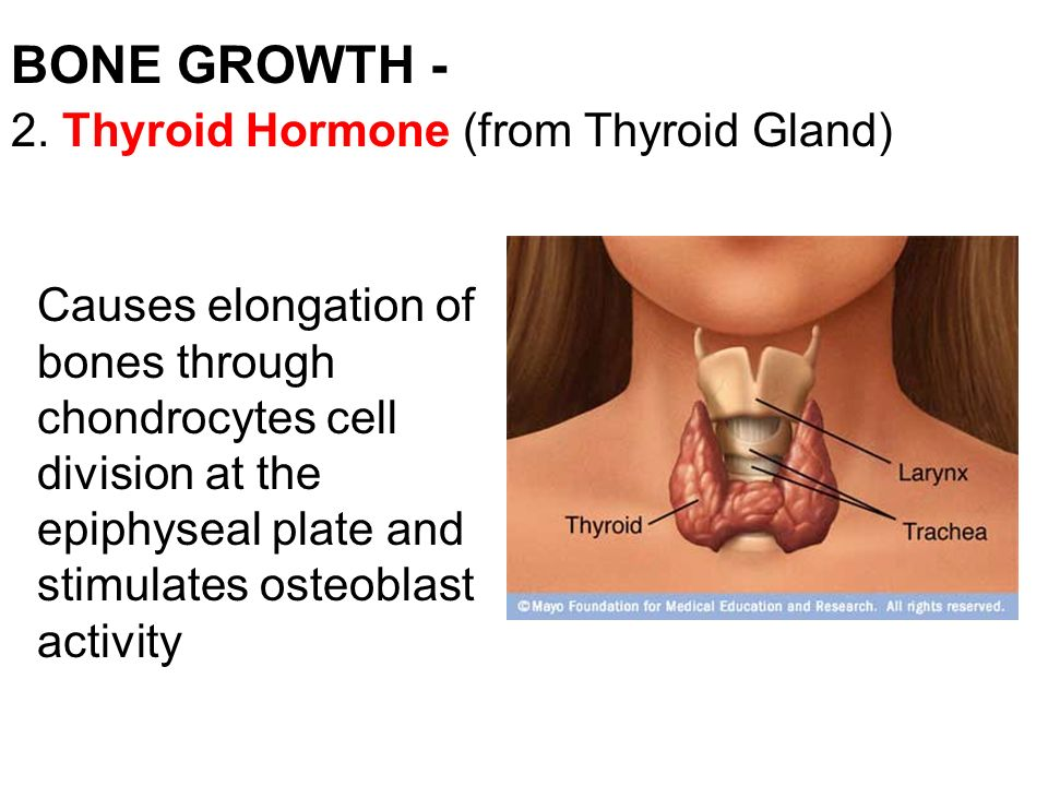 growth and thyroid hormone paper Here you can read posts from all over the web from people who wrote about growth hormone deficiency and hypothyroidism, and check the relations between growth hormone deficiency and hypothyroidism - page 3.