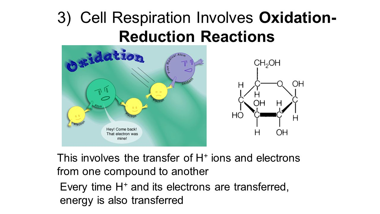 Aim #38: How do our cells carry out aerobic cellular respiration ...