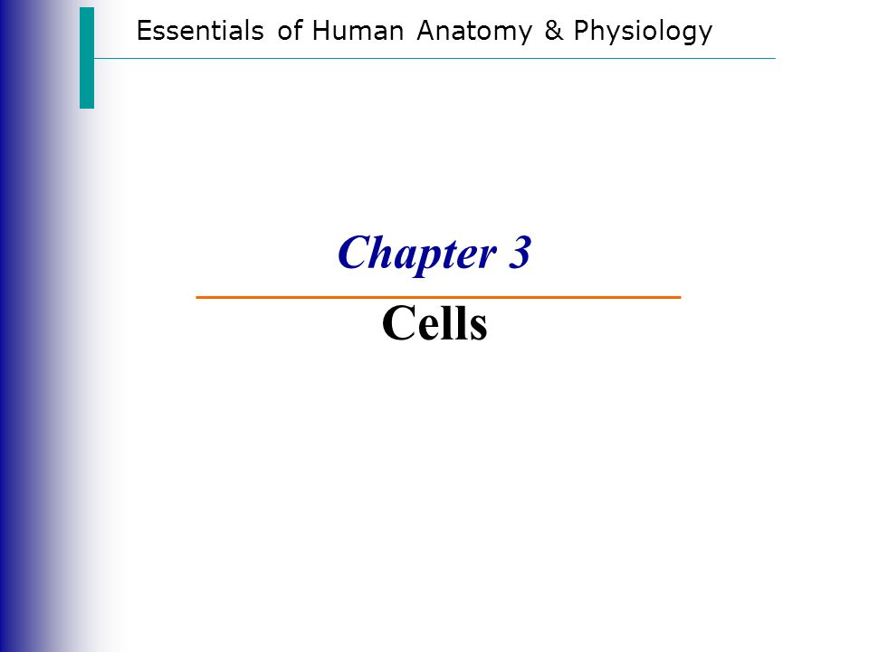 Essentials of Human Anatomy & Physiology - ppt video online download