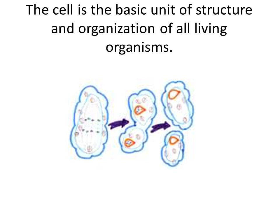 an analysis of the cell the fundamental structural unit of all living organisms Unit sustainability/ structural properties of dna in all living composition and cell products of existing organisms 104.