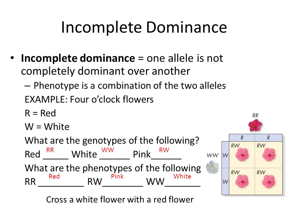1 allele and dominant phenotype Mostly, we have two variants of a gene denoted as dominant allele and a recessive allele which gives different phenotype such conditions are called as biallelic also, it is still possible that we may obtain multiple variants of a gene such condition is called as multiple alleles where we see more than two variants of a gene such an example.