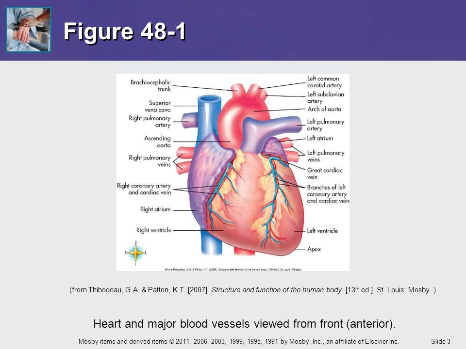 Chapter 48 Care of the Patient with a Cardiovascular or a Peripheral ...