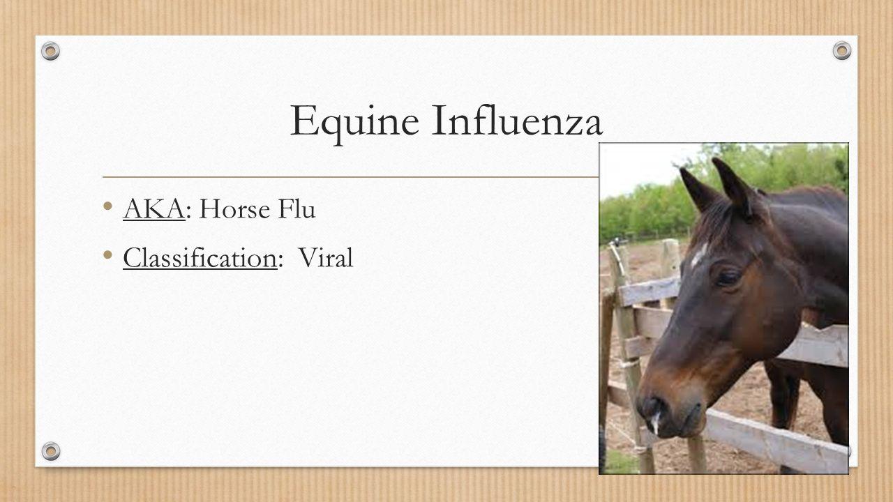 Equine Flu: Equine Organism ID Week Ppt Video Online Download