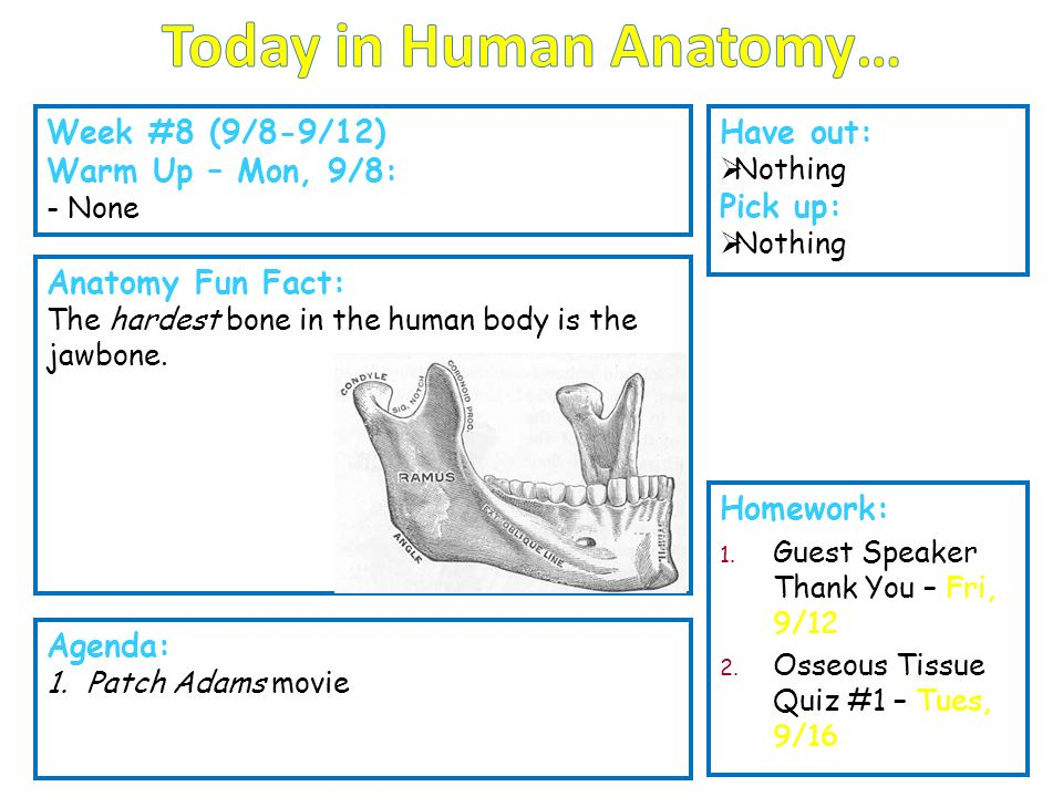 Today in Human Anatomy… - ppt video online download