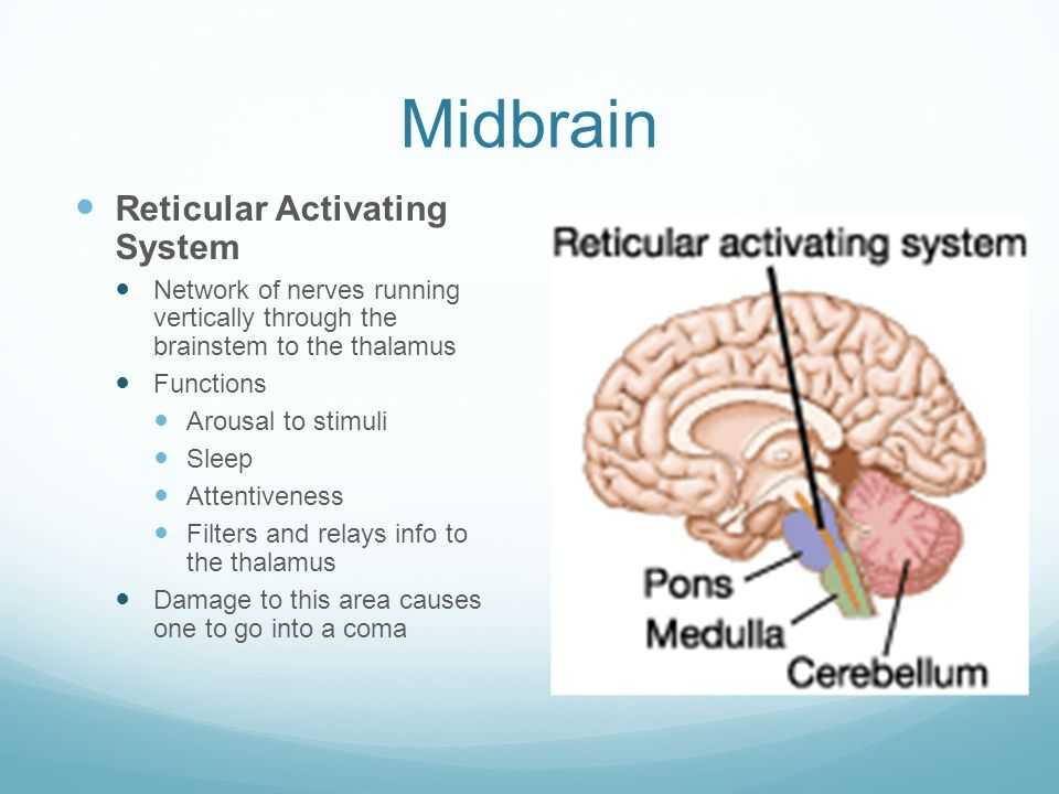 Brain Module 11 and ppt download