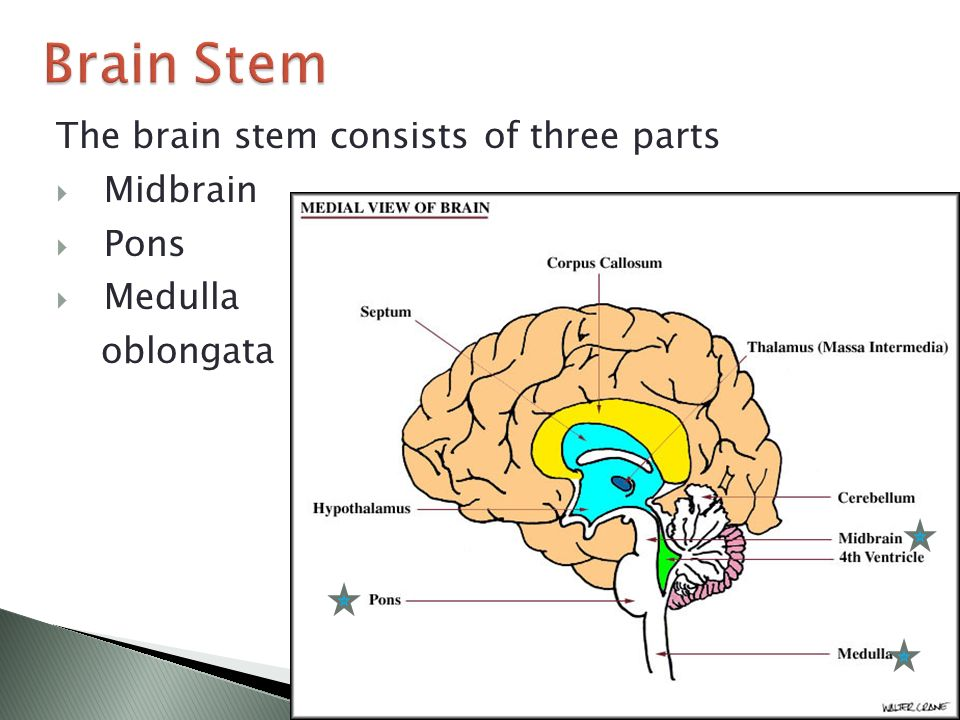 Brain Structure and Function - ppt video online download