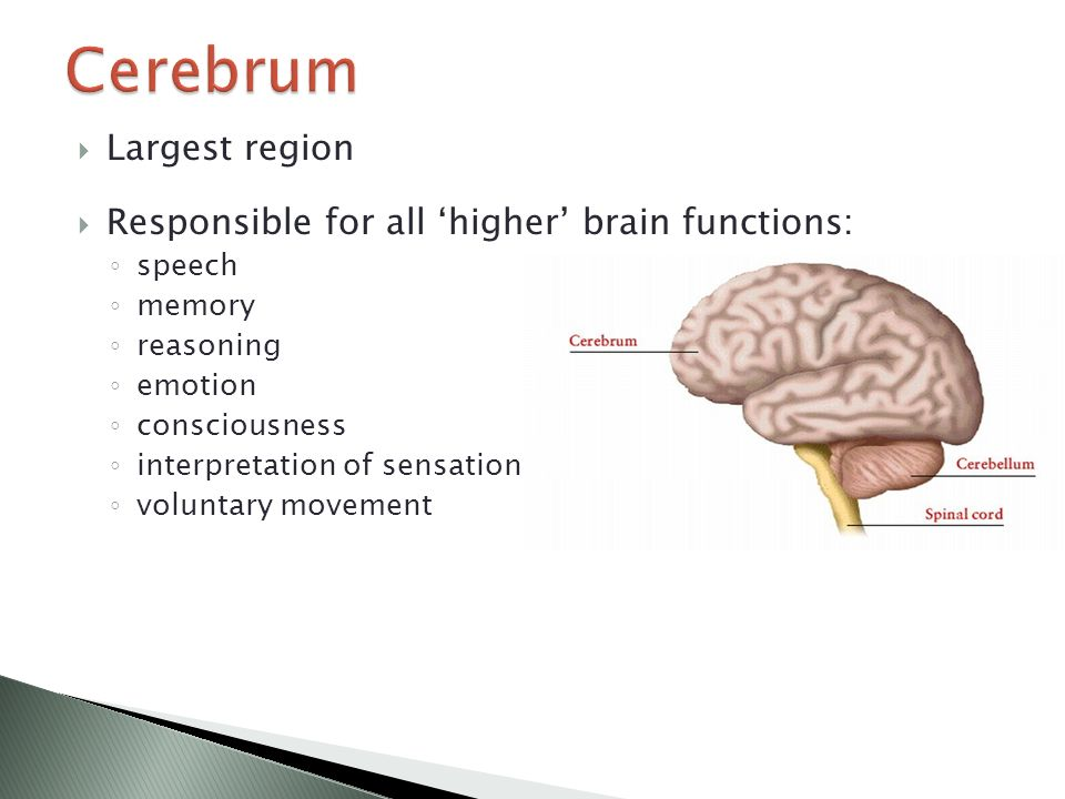 brain structure and function - ppt download, Human Body