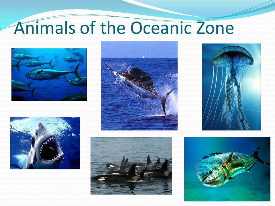 Animals of the Oceanic Zone