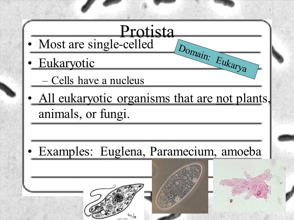 Protista Most are single-celled Eukaryotic